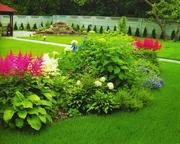 полив газон озеленнение ( Полив Мастер)
