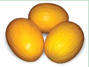 Семена дыни (Китано).
