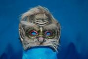 Карнавальная маска Чертика на прокат в Астане