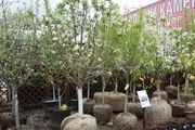 посадка деревьев и кустарников на участке