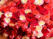Нужно поздравить близкого человека? У нас букеты роз по ОПТОВЫМ ЦЕНАМ!