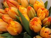 Цветы , тюльпаны к 8марта от производителя.более 25 сортов