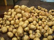 Картофель оптом с доставкой